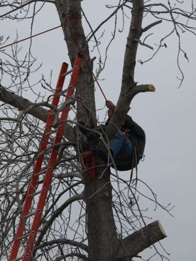 Willies Tree Service
